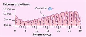 Uterine Lining Thickness Chart