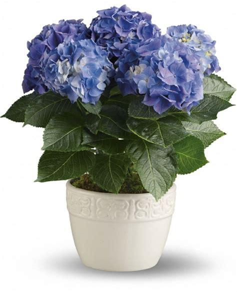 Blühende Zimmerpflanzen Pflegeleicht by Diese Zimmerpflanzen Sind Schattig Und Pflegeleicht