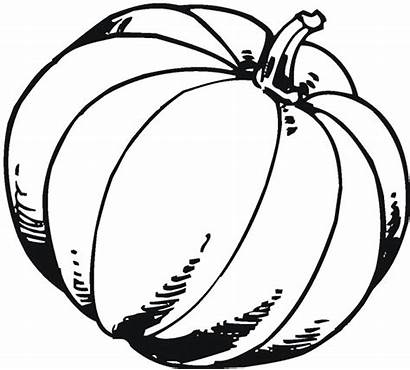 Pumpkin Coloring Pages Fall Blank Printable Drawing