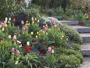 Blumenzwiebeln Richtig Setzen : setzen sie blumenzwiebeln aber bitte nicht zu fr h ~ Lizthompson.info Haus und Dekorationen