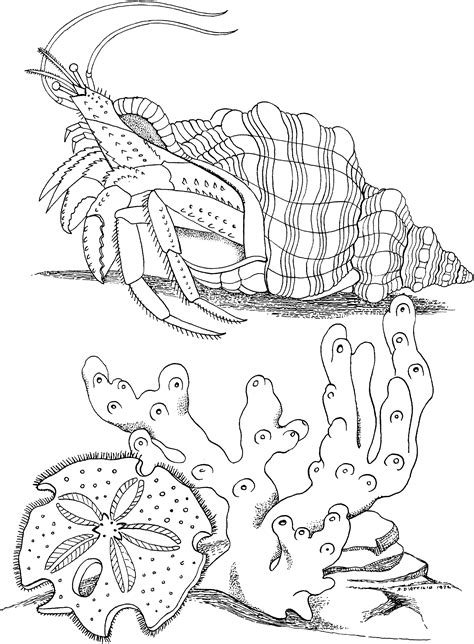 Coloring Pages To Print by Free Printable Hermit Crab Coloring Pages For