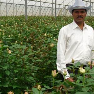 Sachin Jamdade | Floriculture and vegetable grower