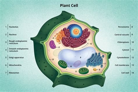 Discovery Structure Cells Biology Visionlearning