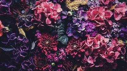 Wallpapers Mac Floral Desktop Iphone Rose Pink