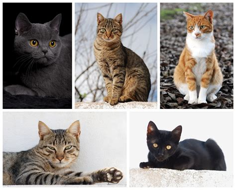 how are cats file cat poster 2 jpg wikimedia commons