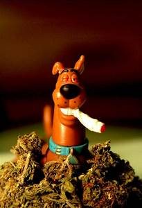 Scooby Doobie Doo   Fun Marijuana Blog   THC Finder ...