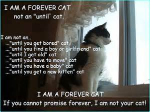 what cat am i singapore community cats i am a forever cat not an