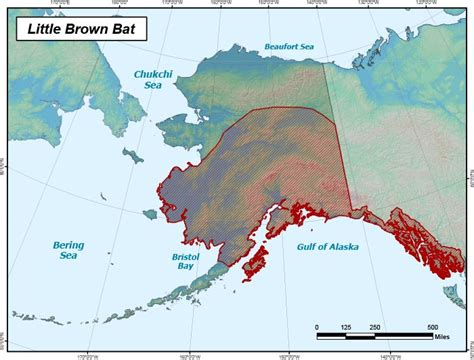 brown bat range map alaska department  fish  game