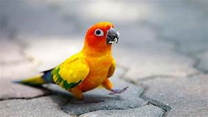 Cute Colorful Parrot HD Wallpapers - New HD Wallpapers