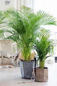 Zimmerpflanze Große Blätter : zimmerpflanzen gegen den winterblues pflanzenfreunde ~ Lizthompson.info Haus und Dekorationen