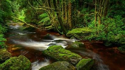 Bing Rivers Gordon Franklin Wild National Park