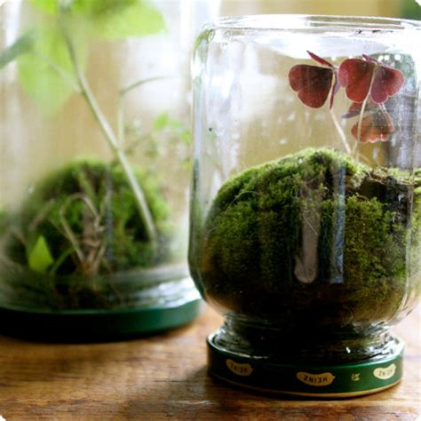 Mini Terrarium Mit Moos In Ein Marmeladenglas Selber Machen