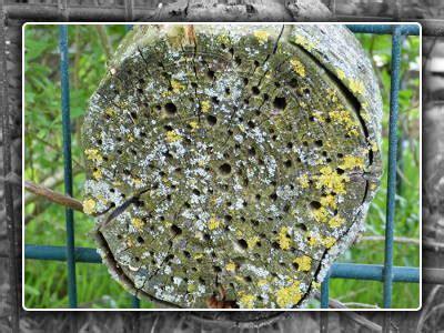 baum eingehen lassen garten aquarellestark seite 3 kahlschlag an der alten blutbuche im