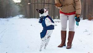 how to keep dogs warm in the winter