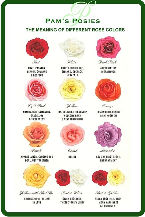 roses colors meaning photos flower colors drawings gallery
