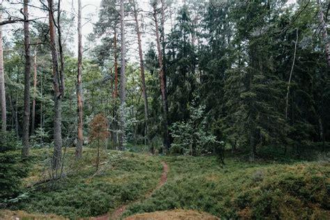 Pasaku mežs Lāčupītes dendrārijā - Artis Pupiņš