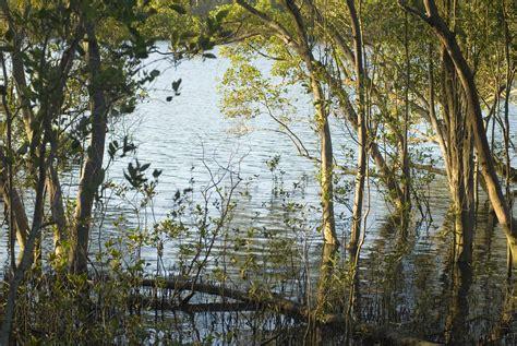 wetland trees sw plants in wetland ecosystem 4079 stockarch free stock photos