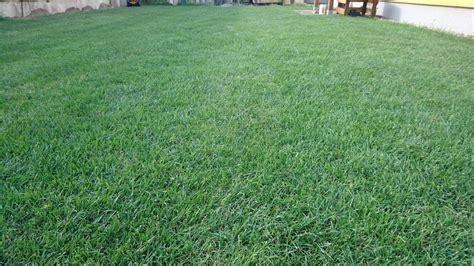 Unebenen Rasen Ausgleichen by Beratung Zum Rasen Und Wie Vorgehen Seite 2