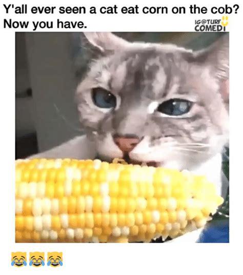Corn Memes - 25 best memes about cob cob memes