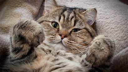 Cat Screensavers Wallpapers Cool Downloads Walldiskpaper