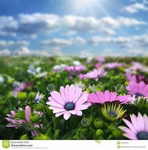 Wiese Mit Blumen : wiese mit blumen stockbild bild von field vordergrund ~ Watch28wear.com Haus und Dekorationen