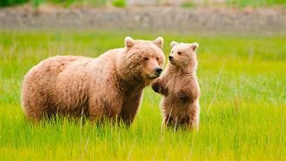Grizzly Bear Friendly Wildlife Certified