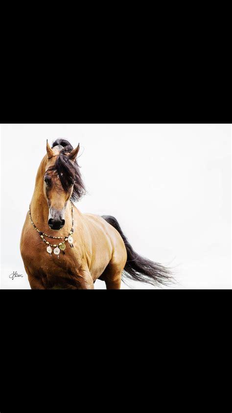 horses arabian animals equestrian gentle thunder creatures giant magic uploaded
