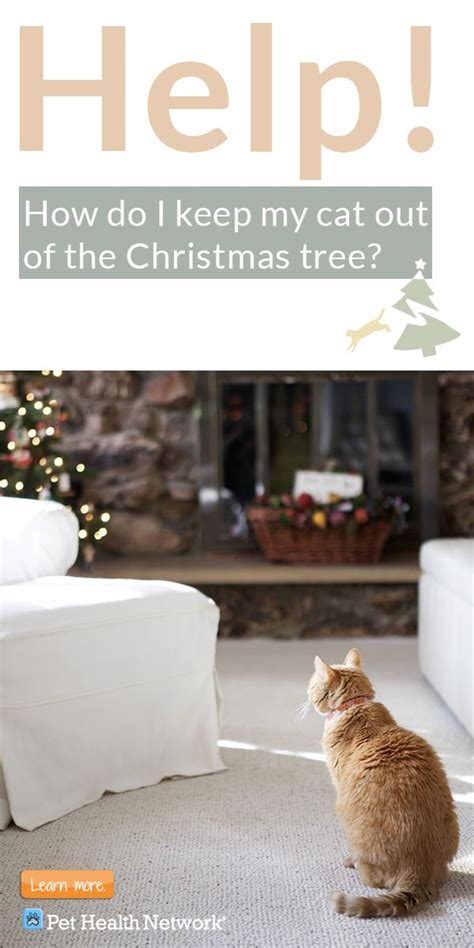 how do i keep my cat out of the christmas tree sweet