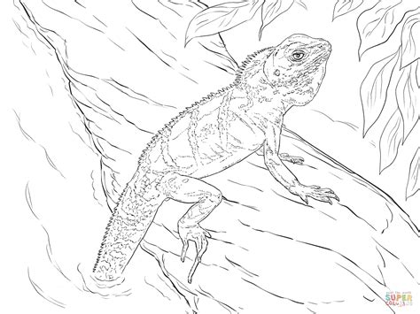 Realistic Chinese Water Dragon Coloring Page Free