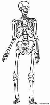 Skeleton Coloring Human Pages Skeletons Anatomy Printable Bones Drawing Sheets Simple Cool2bkids Getdrawings Skull Ribs Books Printables Children Drawings Sketch sketch template
