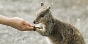 Totally Adorable And Very Rare Wallaby Spotted In ...