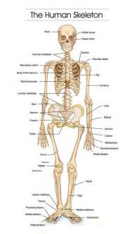 How many bones can you find in the human body?: 43 best Exercise Science/Nutrition images on Pinterest | Human anatomy, Health and Physical therapy