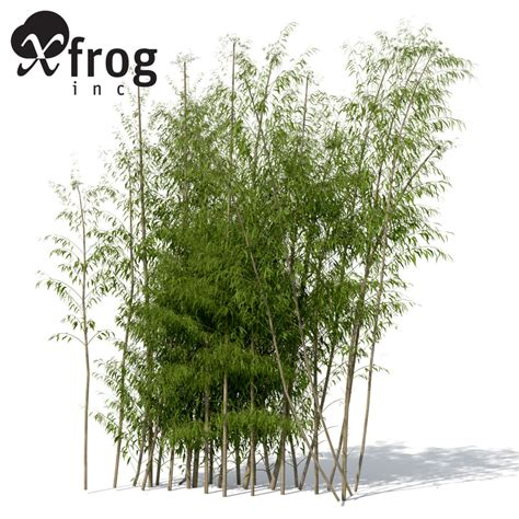golden bamboo plant 3d max