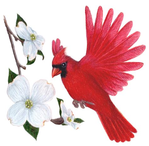 red dogwood clipart   cliparts  images