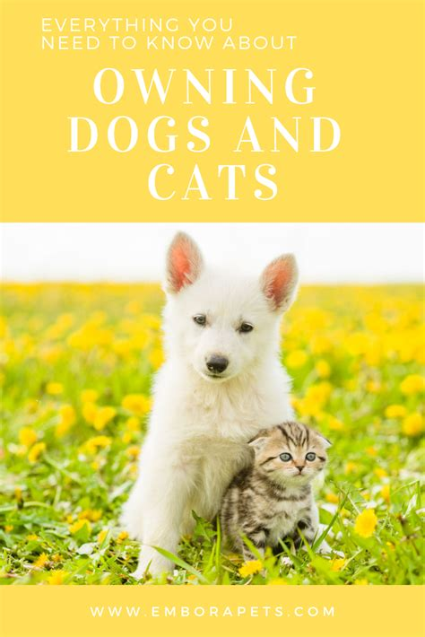 cat excited dog cats dogs emborapets give articles list furry