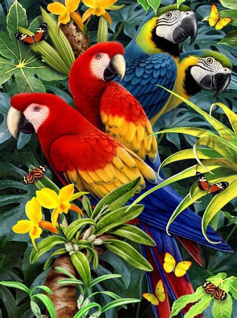 malen nach zahlen pjs papagei royal langnickel