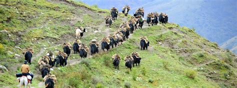 tibetan bureau office how to arrange tours to tibet tibet travel info tibet