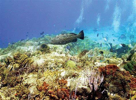 animals cozumel grouper pets fish