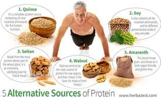 5 alternative sources of protein herbazest