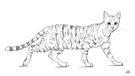 draw  tutorials  drawing animals people