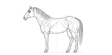 draw  horse step  step