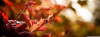 Bokeh Foliage Autumn