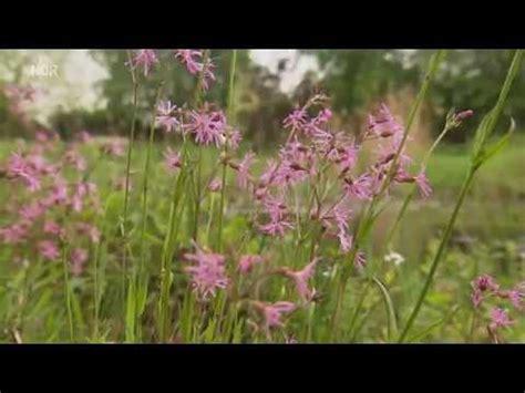 Der Garten Ohne Gärtner by Garten Ohne G 228 Rtner