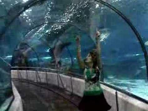 aquarium de barcelone adresse papicha a l aquarium de barcelone