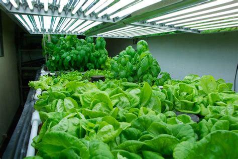 Grow Bulbs For Indoor Plants by Grow Lights For Indoor Plants