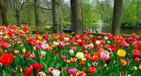 amsterdamse bloemen tulpen 17 beste afbeeldingen van bloementuin tuinbloemen