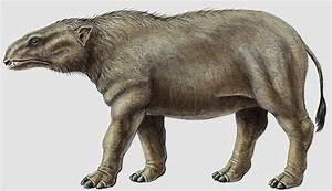 Phosphatherium - Dinopedia - the free dinosaur encyclopedia  Phosphatherium