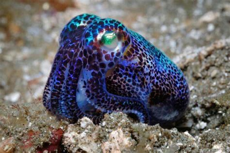 happy cephalopod awareness day bluejayblog
