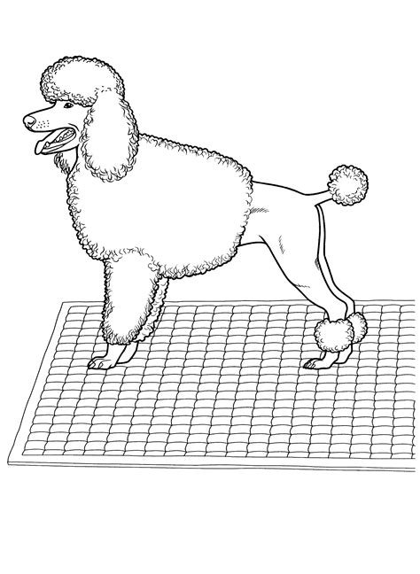 coloring page poodle