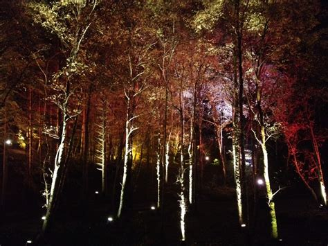 enchanted forest inspiring outdoor lighting display